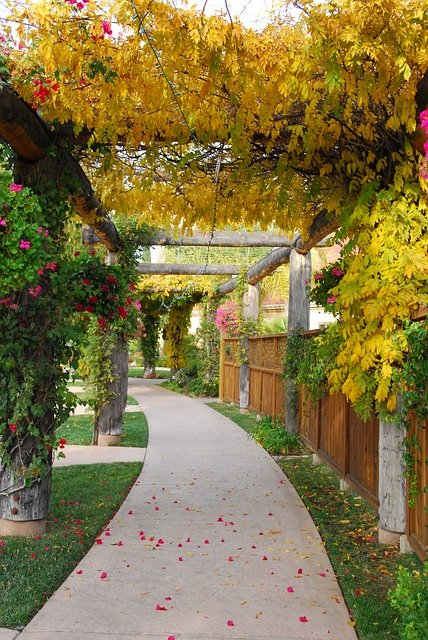 Walkway Path Structure Canopy  - bianca-stock-photos / Pixabay
